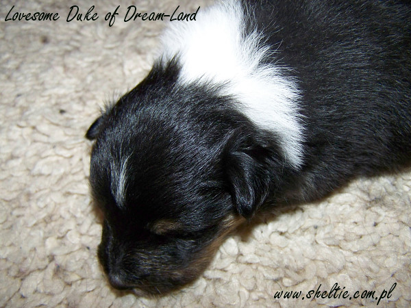 2,5weeks-male_duke4.jpg