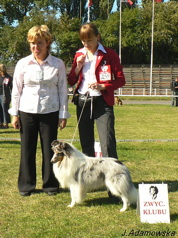 Lovesome sheltie - Merlin Club Winner PL'2009 (21 mths)