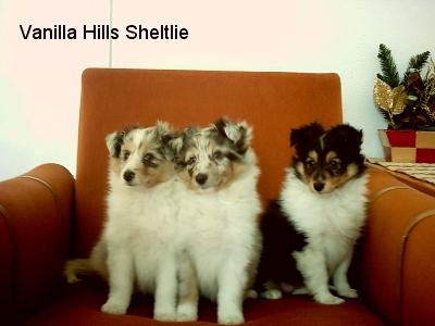 dzieci Zefiego w hod. Vanilla Hills