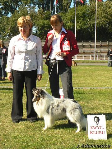 Lovesome sheltie - Merlin Club Winner PL'2009 (21 mths)