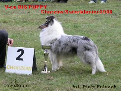Merlin - ostatni dzieñ w klasie szczeniąt V-ce BIS Puppy!!!