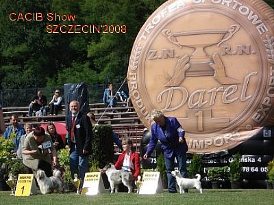 Merlin V-ce BIS Puppy - CACIB Szczecin 2008